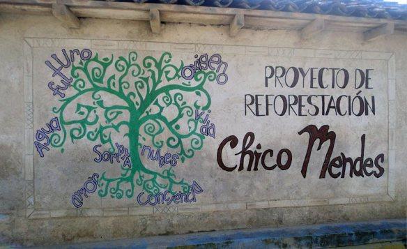 proyecto-de-reforestacion
